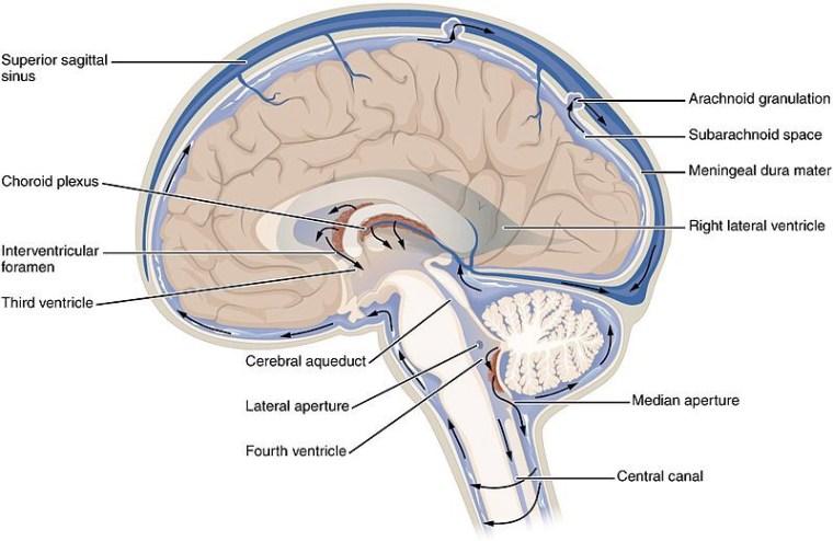 Beyin Omurilik Sıvısı (BOS) – Laboratuvar Tanı Bilimi – Laboratuvar Ödevleri – Lab Ödevleri – Kimya Mühendisliği – Kimya Ödev Yaptırma Ücretleri